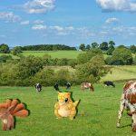 Pokemon Go : Des Pokemon à la campagne